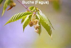 a_buche11