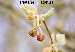 a_plat2
