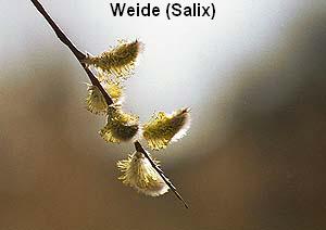 a_weide3